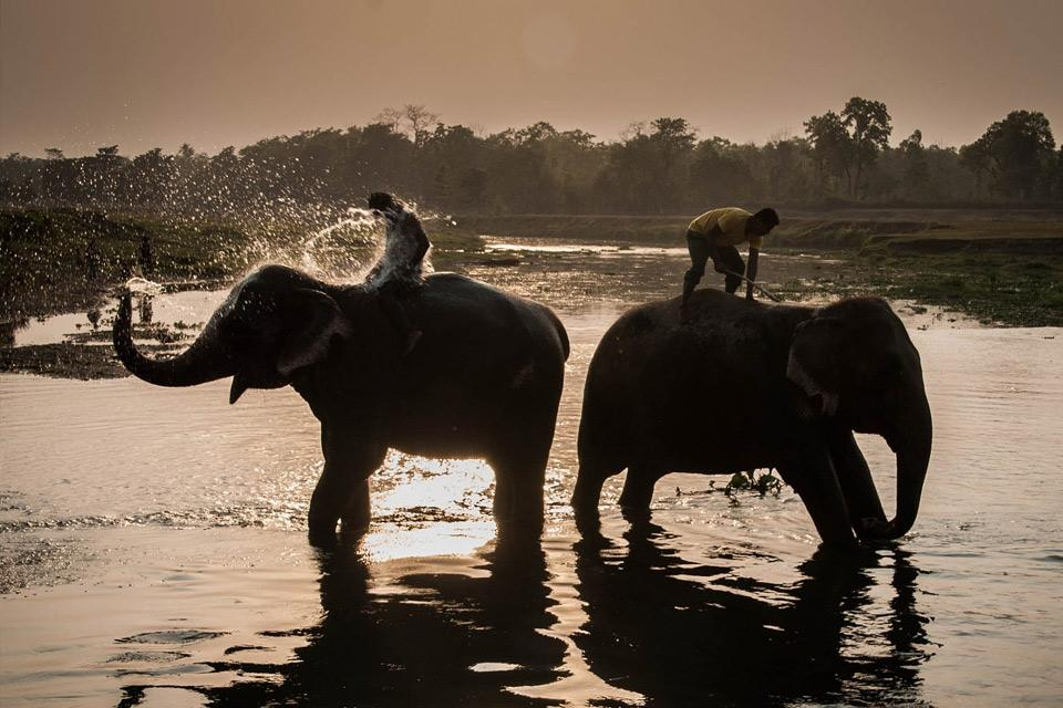 Kathmandu and Chitwan National Park Tour Package