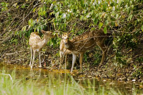 Bardia National Park Wildlife Safari Tour