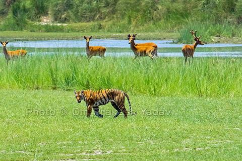 Bardia National Park & Kathmandu Luxury Tour Package - 6 days